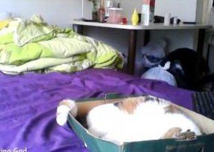 babe misshowl flashing bore on live webcam - www.find6.xyz